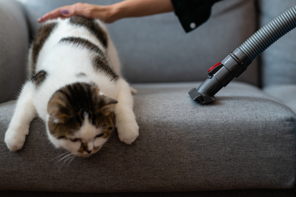 6 Unique Ways to Use Your Vacuum Cleaner 1